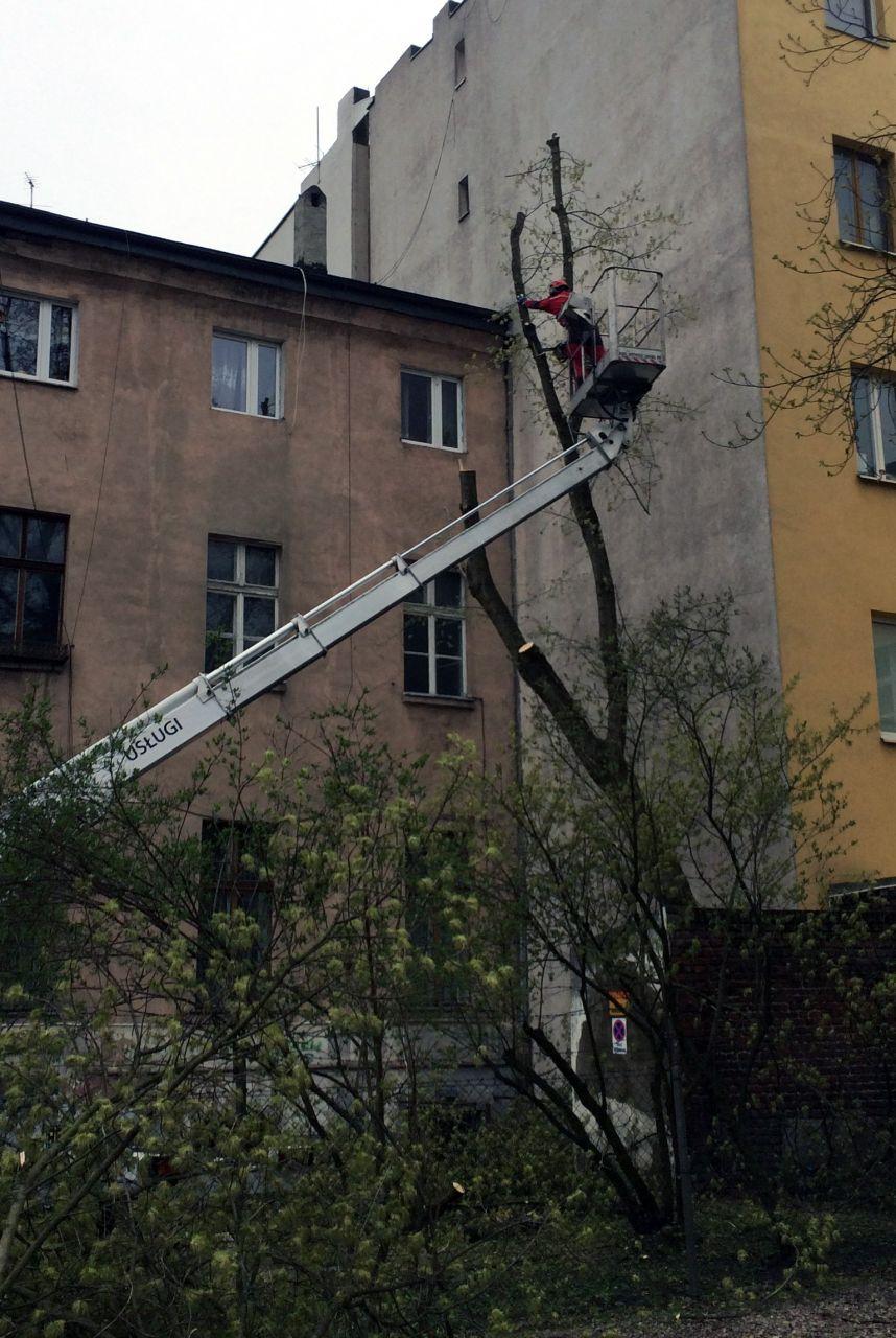 uniwersum_wycinka_drzew1
