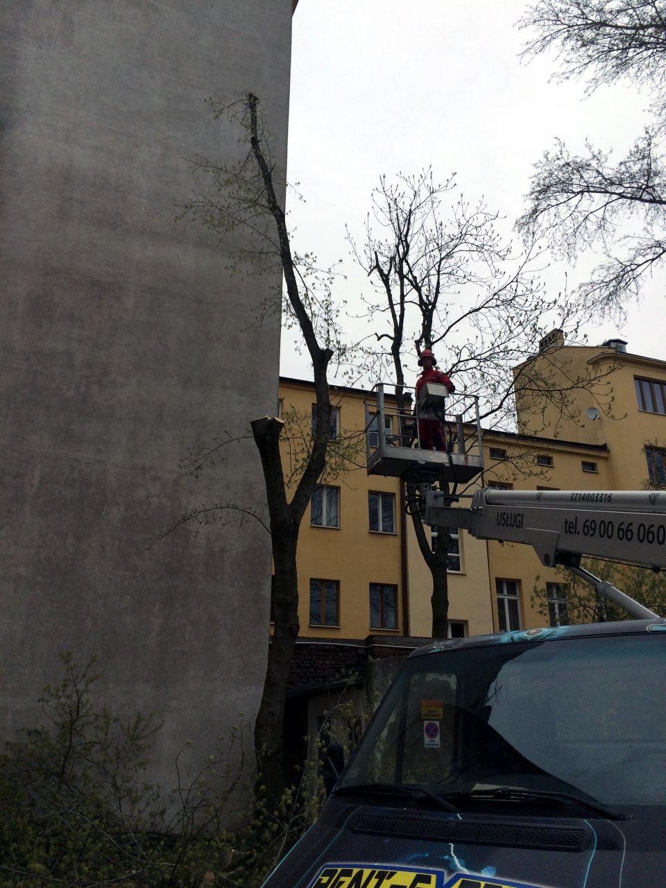 uniwersum_wycinka_drzew3