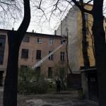 uniwersum_wycinka_drzew4