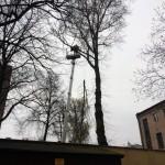 uniwersum_wycinka_drzew6