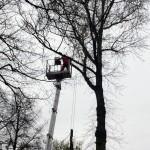 uniwersum_wycinka_drzew7