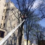 uniwersum_wycinka_drzew8