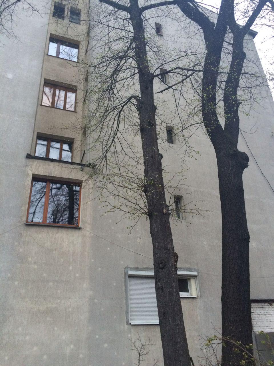 uniwersum_wycinka_drzew9
